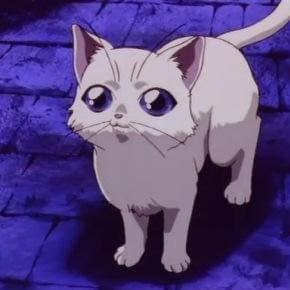 NOIR | 06.迷失的猫