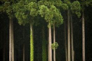 trees-japan-yamashita